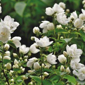 Bunga cantik untuk dekorasi halaman rumah